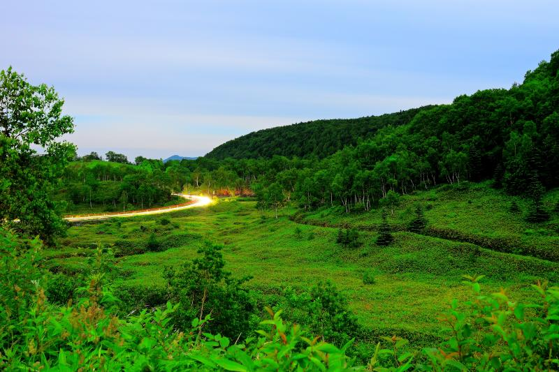 平床 国道292号 | 夜の高原を車が走り抜けて行きます。白樺林の美しい場所です。