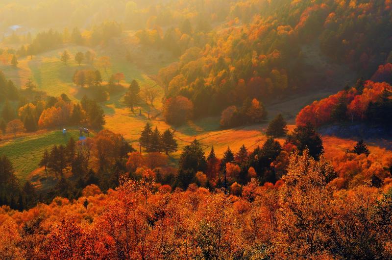 [ 夕暮れの山田牧場 ]  眩しい西日で牧場の紅葉が輝いていました。山田牧場はサンセットスポットで夕方の撮影もおすすめです。
