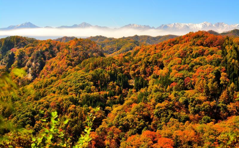 [ 秋本番 ]  雪化粧した北アルプスが紅葉の装いに。信州の紅葉前線は山から里へと降下していきます。