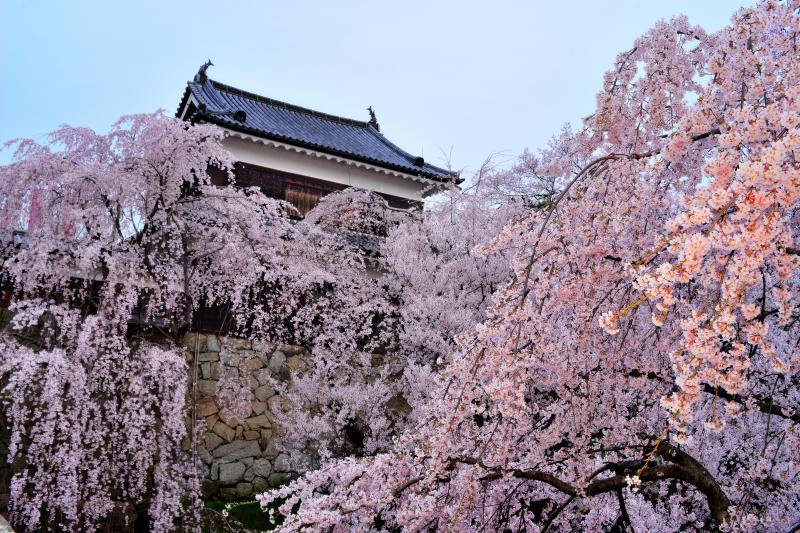 上田城千本桜まつり |