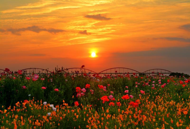 [ 燃える空とポピー畑 ]  ポピー畑と水道橋の後ろに夕日が落ちていきます。静かな一日の終わりを感じることができました。