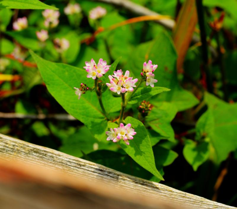 [ 小さな花 ]  遊歩道の脇に咲く花。