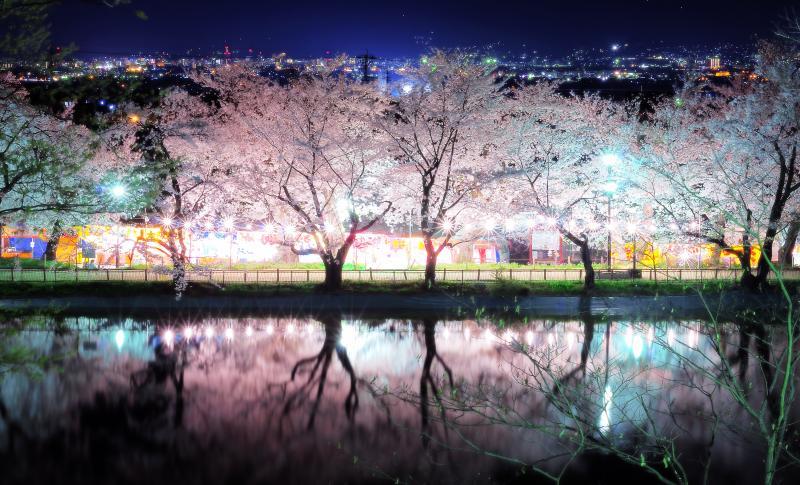 [ 夜桜並木 ]  光り輝く桜並木が竜ヶ池に映ります。奥に見えるのは長野市を中心とした善光寺平の夜景。