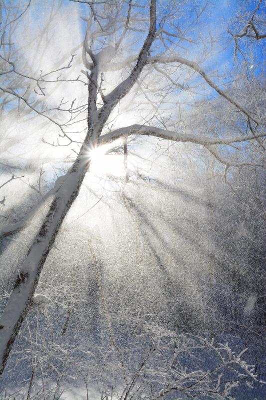 [ 峰の原高原 霧氷 ]  舞い落ちる粉雪が幻想的な光を映し出していました。