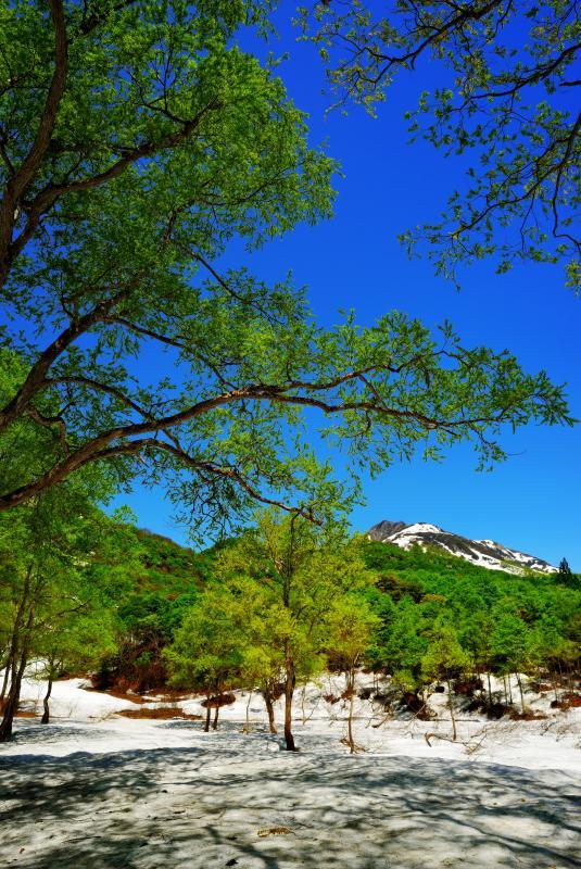 [ 澄み渡る空と雨飾山 ]  樹々が芽吹き、色鮮やかな新緑に包まれる雨飾高原。つぶれ池より日本百名山を望む。
