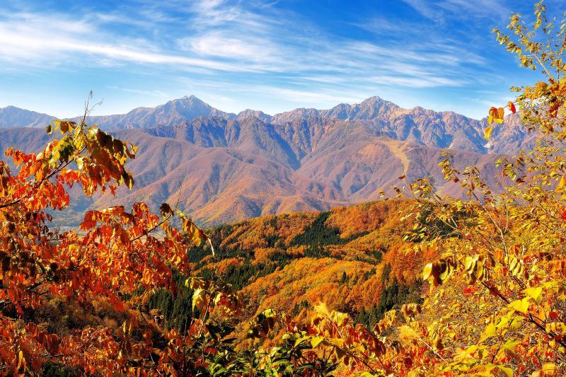[ 秋の白沢峠 ]  紅葉と北アルプス後立山連峰