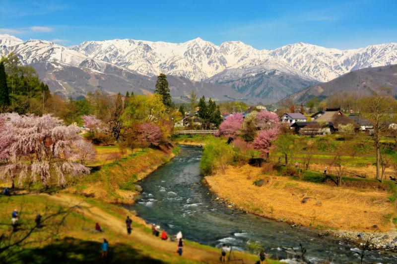 白馬村の春 | 雄大な北アルプスと姫川の流れ。雪が消え、桜が咲く「信州の春景色」