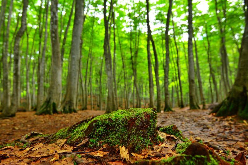 [ 苔 ]  美人林周辺はしっとりとした空気に包まれています。