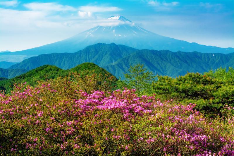 ミツバツツジと富士山 |