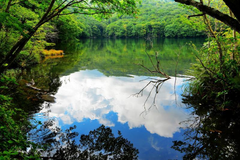 空と緑を映す水面 |