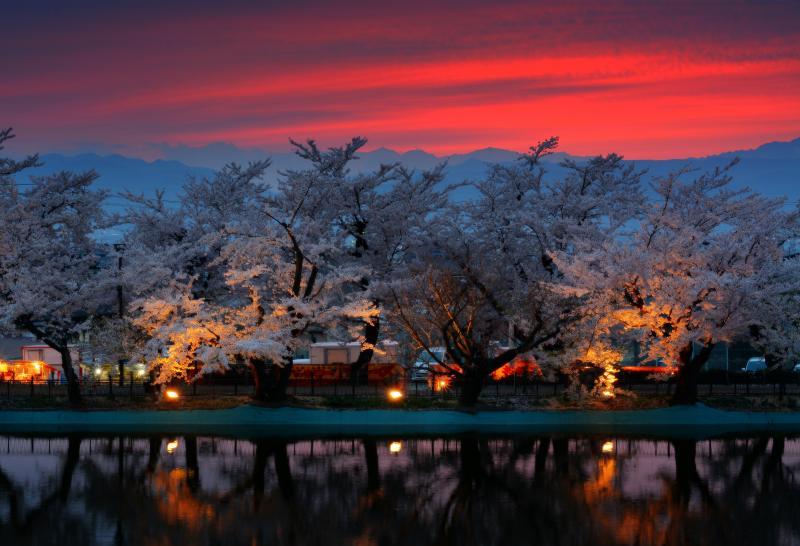 [ 夕暮れの桜並木 ]  日が沈み夕焼け色に染まる空。臥竜公園からは遠くに北アルプスが見えます。