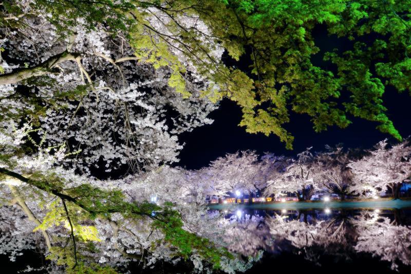 [ 幻想夜桜 ]  対岸の桜並木が竜ヶ池に映り幻想的でした。