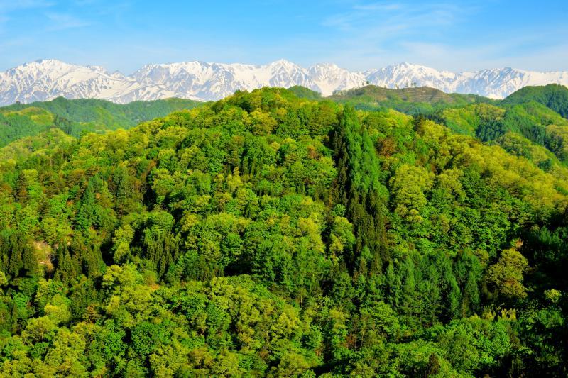 [ 残雪の北アルプスと新緑の山々 ]  自然豊かな信州小川村。鮮やかな緑と雪山を撮影することができます。