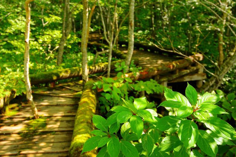[ 木漏れ日 ]  やさしい光が深い森に降り注ぎます。