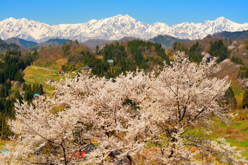 [ 信州 小川村成就 ]  雄大な北アルプスの眺め。左から爺ヶ岳、鹿島槍ヶ岳、五竜岳。