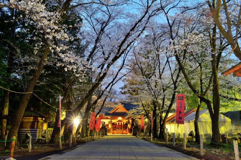 [ 眞田神社 ]  東虎口櫓門をくぐった所にある真田神社。参道に立ち並ぶ桜並木。神社幕には「六文銭」「永楽通宝」「五三の桐」が描かれています。境内には真田井戸があります。