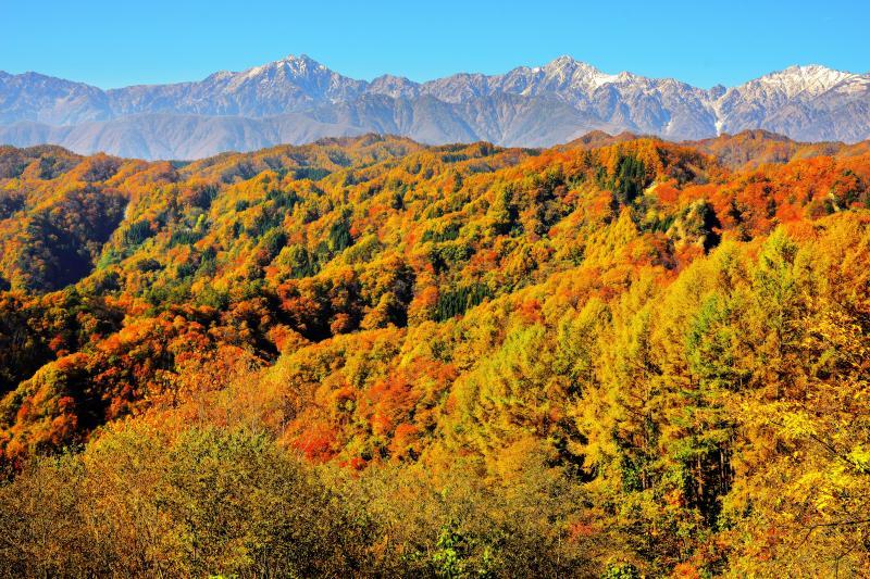 [ 秋のグラデーション ]  北アルプスへと続く山々が秋色に染まります。豊かな植生・日当り良好・風の影響が少ない、小川村は紅葉の条件が整った場所。
