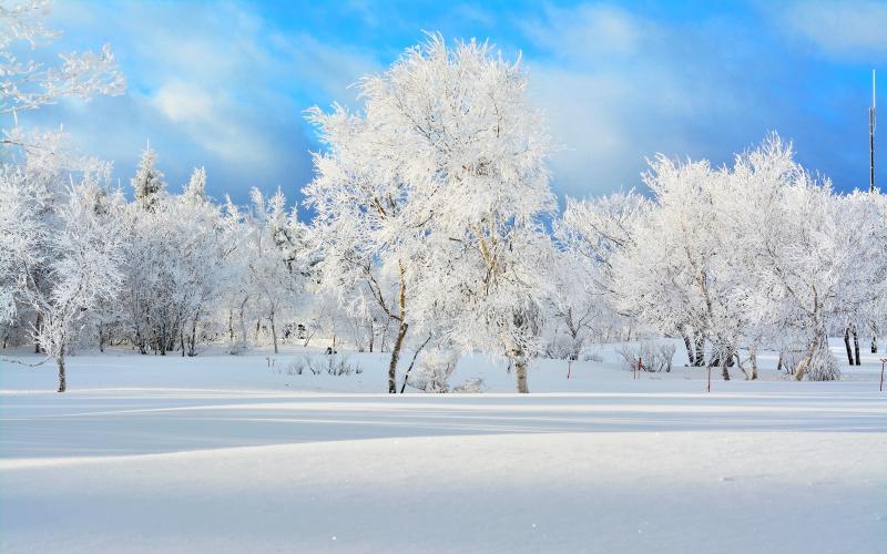 [ ホワイトツリー ]  強い寒気が過ぎ去るとすべての樹木が冷凍保存されていました。早朝の太陽光で雪原に伸びる長い影。
