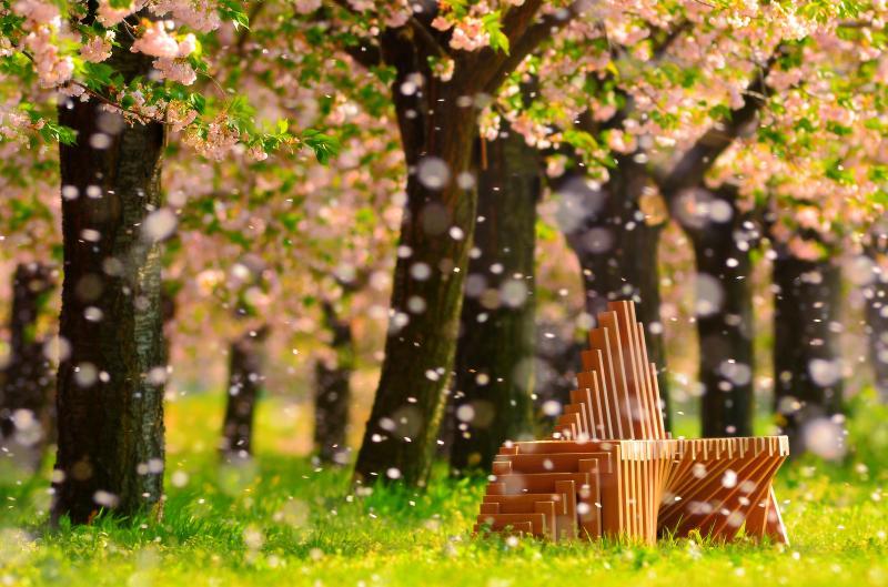 [ 桜吹雪 ]  舞い散る花びらが雪のようでした。望遠レンズ使用。絞りは解放にして花びらを丸ボケに。ピントはベンチ合わせて、ローアングルで奥行き感を強調。