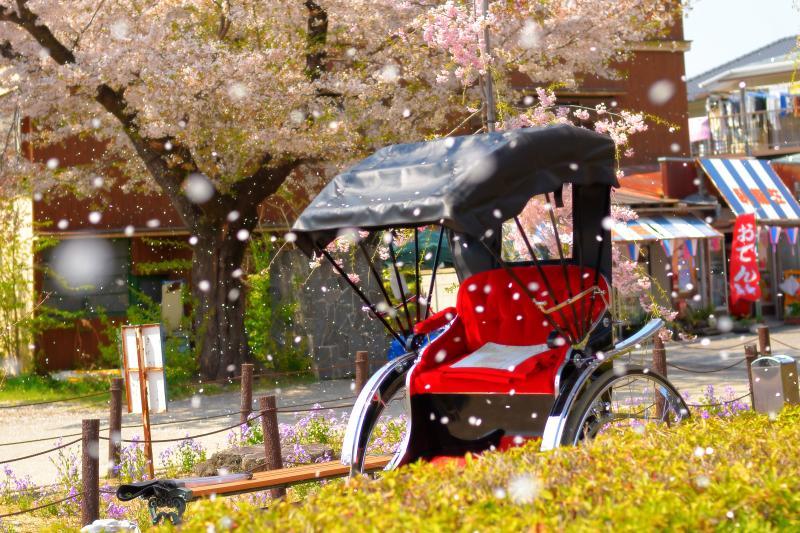[ 桜雪 ]  日本さくら名所100選に選ばれており、臥竜公園「さくらまつり」が開催されている。