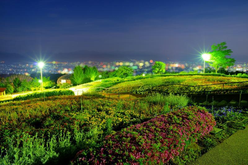 [ 夜の花壇 ]  園内にはたくさんの花が咲き誇っています。花壇とドーム、甲府の街明かりが美しい。