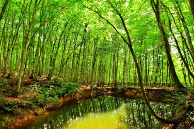 鏡池| 美人林にある池。ブナの森を映す水鏡。
