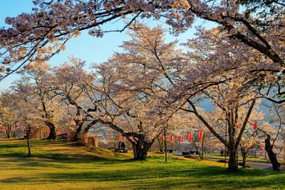 大町公園の桜|