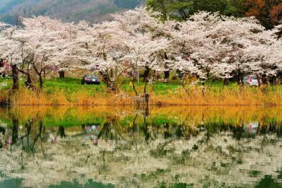 治田公園の桜|