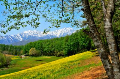 春の中山高原| 残雪の北アルプス、丘の斜面を埋め尽くす菜の花、芽吹いた樹々の新緑。さわやかな春の風景。
