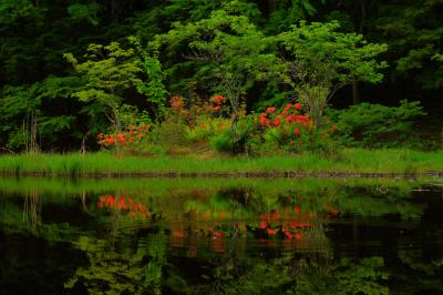 甘利山椹池|