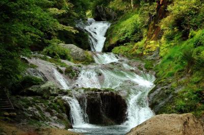 苔むした岩肌と数段の流れ  正面からのおしどり隠しの滝。深い緑の中から溢れ出す白い水流の帯。岩場に群生している苔は、酸性の水で育つチャツボミゴケ。