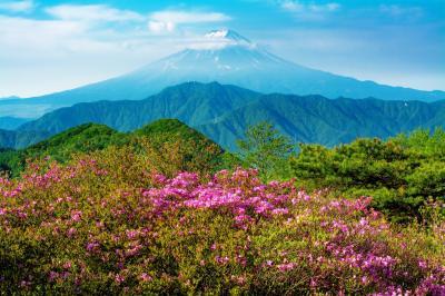 ミツバツツジと富士山|