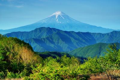[ 大蔵高丸からの富士山 ]  左右の稜線のバランスが美しい、新緑に映える富士山。