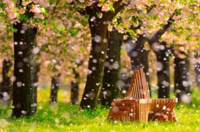 桜吹雪| 舞い散る花びらが雪のようでした。望遠レンズ使用。絞りは解放にして花びらを丸ボケに。ピントはベンチ合わせて、ローアングルで奥行き感を強調。