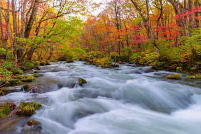 奥入瀬渓流 紅葉|