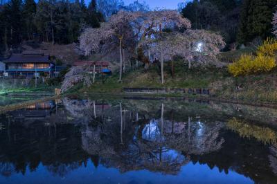 中島の地蔵桜|